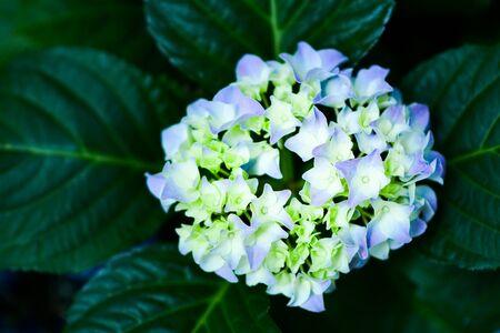 Beautiful flowers in the garden. 版權商用圖片 - 138528824
