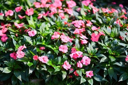 Beautiful flowers in the garden. 版權商用圖片 - 138528862
