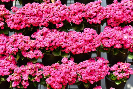Beautiful flowers in the garden.