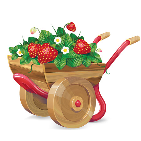 wheelbarrow strawberry