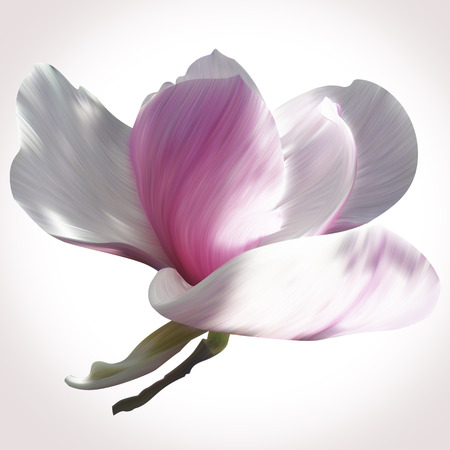 gorgeous: Magnolia illustration close-up on white backdrop for design of posters, banner, birthday cards, greetings, cover, magazines and other. Unique style of flowers. Beauty and fresh collection of spring.