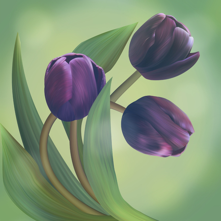 tulip: Composition with Black tulips in beautiful green frame. Unique banner for congratulation, conceptual illustration. Stock Photo
