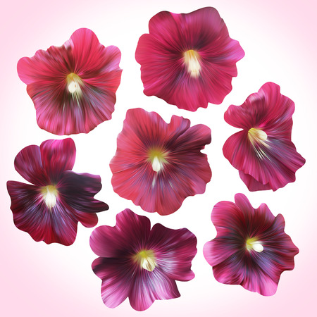 convolvulus: Set of Purple Mallow heads for floral design. Collection botanical illustration for cards, posters, banners. Stock Photo
