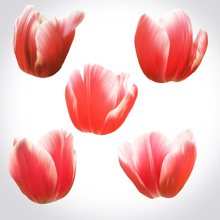 Collection of Red Tulips heads for design. Set of floral buds for decoration. Isolated on light backdrop. Stock Photo