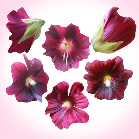 buds: Set of Purple Mallow heads for floral design. Collection botanical illustration for cards, posters, banners. Stock Photo