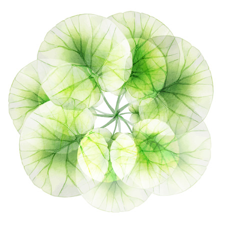 Watercolor floral round patterns.