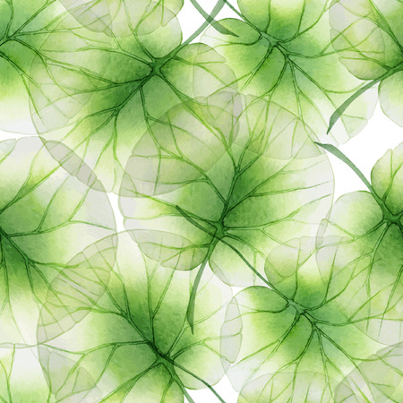 lirio de agua: Acuarela patrón floral transparente con hojas de loto Vectores