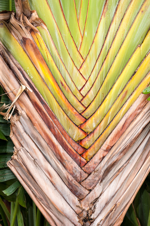 dry leaves: Brown leaves after palm leaves dry out