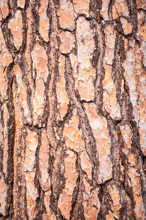 grooves: Close up of tree bark texture and grooves