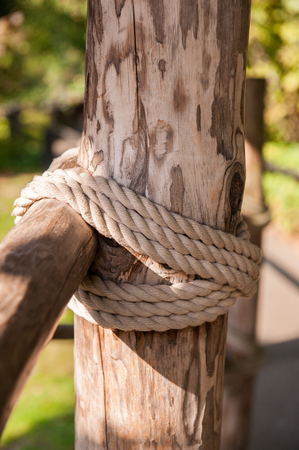 roped: Close up of a roped tree structure