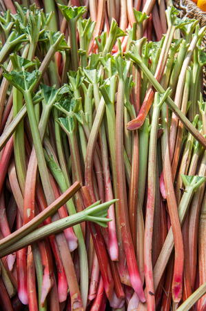 stalks: Large red and green Rhubarb stalks at market
