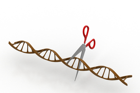 Scissor cutting dna structure