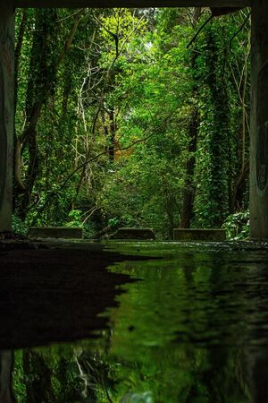 green water pond surrounded by trees nature picture