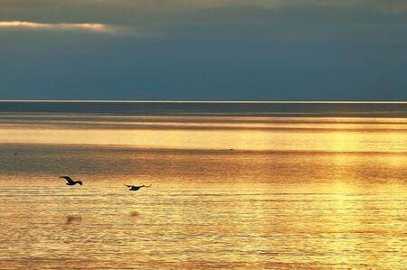 birds flying over the sea during sunset nature image Standard-Bild