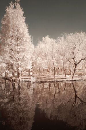 white trees near body of water during daytime nature picture Фото со стока