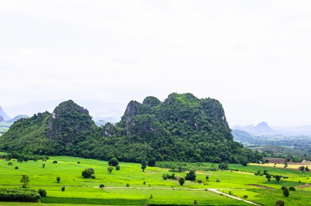 highland region: Landscape mountain and green plant in thailand Stock Photo