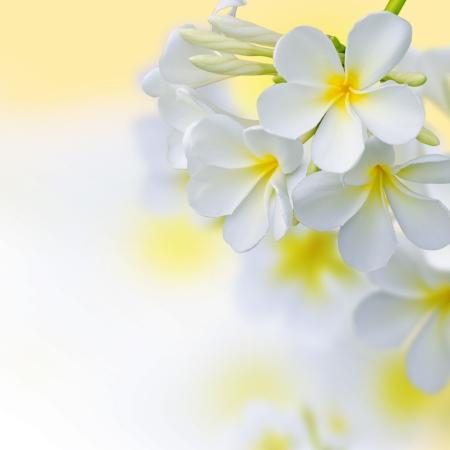 amarillo: Frangipani Plumeria Tropical Spa Flower Design Border