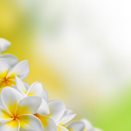 Frangipani Plumeria bloemen grens ontwerp Stockfoto - 20048923