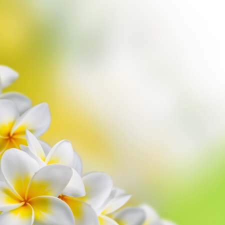 Frangipani Plumeria flowers border Design Imagens - 20048923
