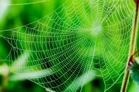 spider web or cobweb with water drops after rain against green background