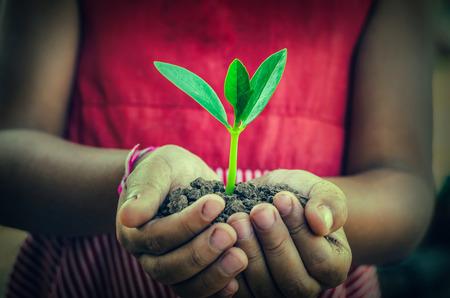 agarrados de la mano: mano que sostiene una planta joven verde