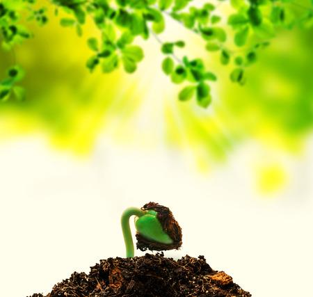 new born: new life born plant