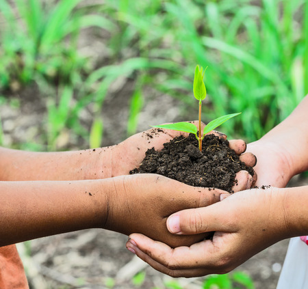 soil: child holding young plant in hands . Ecology concept