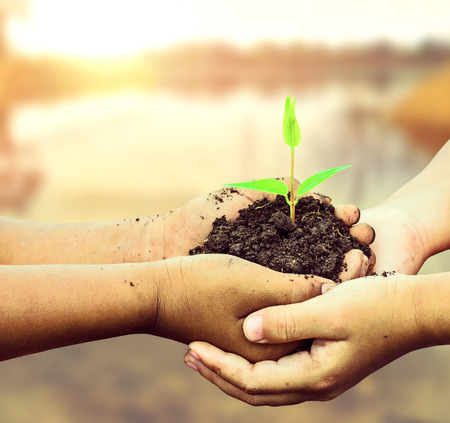 child holding young plant in hands . Ecology concept