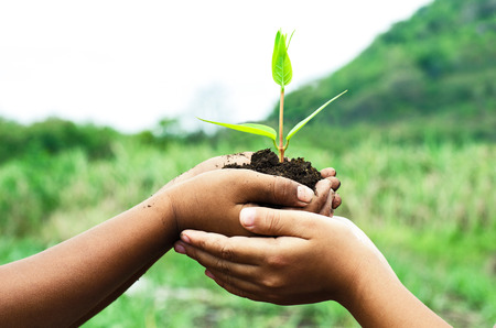 child holding young plant in hands against spring green background. Ecology concept