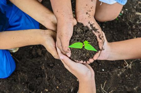 arbre: three children hand hold green tree