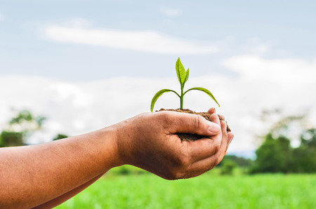 hands holding plant: hands holding plant over nature background