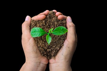 feuille arbre: Hands holding jeune plante fond noir