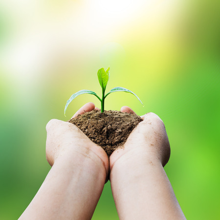 hands holding plant and sunlight blur background