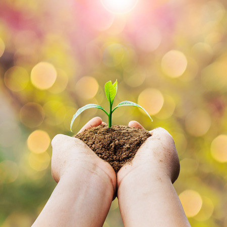 hands holding plant: hands holding plant and sunlight Stock Photo