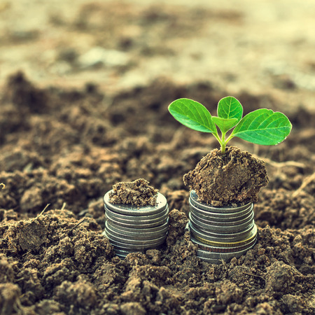 success symbol: Golden coins in soil with young plant. Money growth concept.
