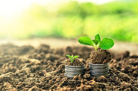 若い植物が付いている土に黄金のコイン。お金の成長の概念。