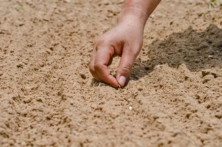 siembra: Germen de la siembra, Agricultura, Semillas, sembrador, planta, cierre para arriba