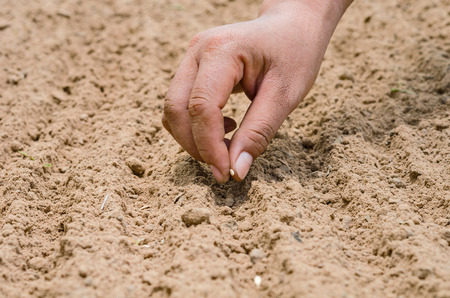 Sowing seed,Agriculture,Seed,Seeding,Seedling, Close up