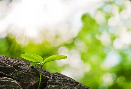 beginning: small tree growth at stone Stock Photo