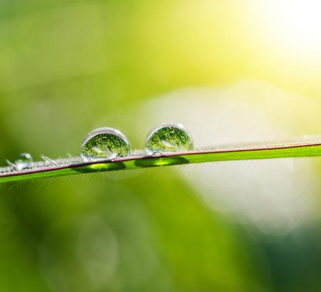 waterdrop: waterdrop on green leaf and sunshine