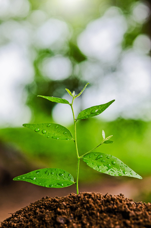green tree: young plant grow and sunshine