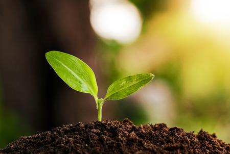 plantando arbol: jóvenes crecen las plantas y el sol Foto de archivo