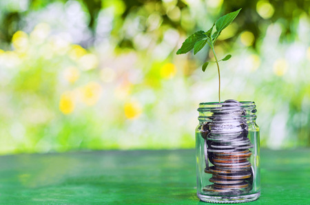 earn money: Plant growing from money jar. Concept of financial investment. Stock Photo