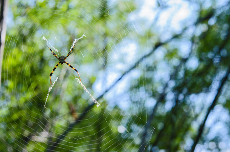 Spider on a spider web with a green background and sunshine