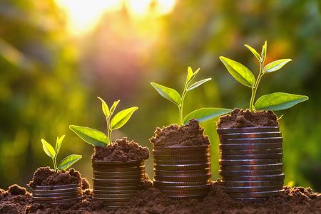 돈 성장 개념, 비즈니스 성공 개념, 돈 동전 더미에 성장하는 나무