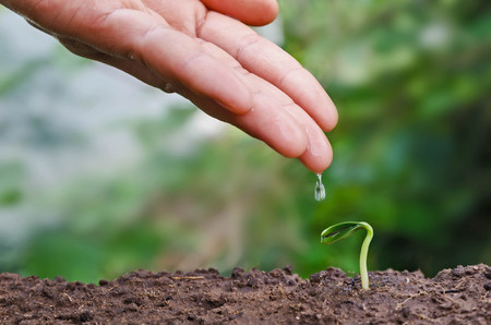 seed and planting concept with hand watering young tree Stock Photo