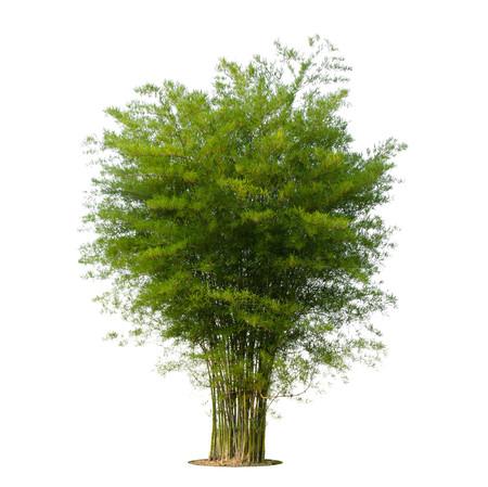 broad leaf: tree green leaf isolate on white background