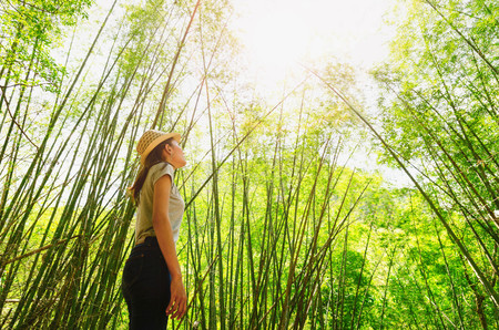 young woman freedom travel  under bamboo forest and lookup  with sunlight
