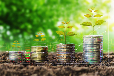 stack of coin growth money and tree concept finance indices on nature background