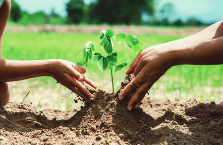 seeding: people hand helping plant the tree working together in farm concept eco